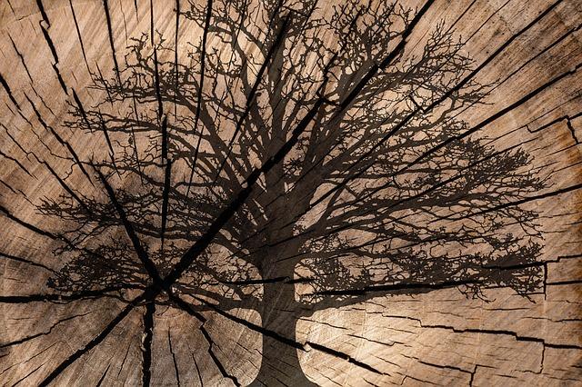 Strom ve stromě