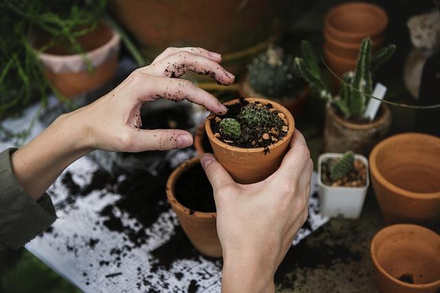 kvetináč, sadenie, kaktus.jpg
